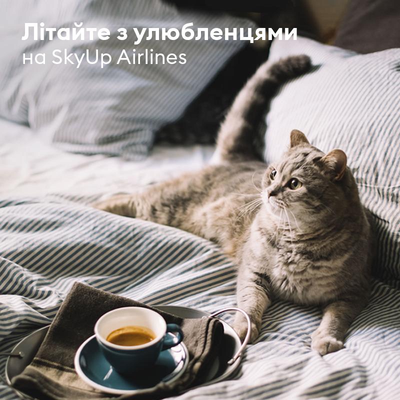 SkyUp котик
